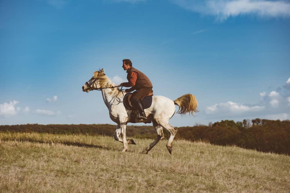 Kako naučiti jahati konja