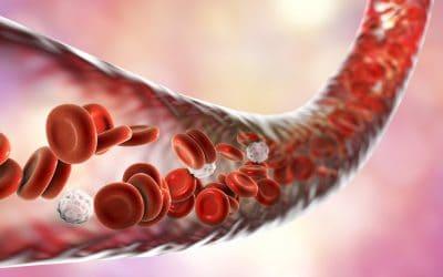 Kako očistiti krvne žile prirodnim putem