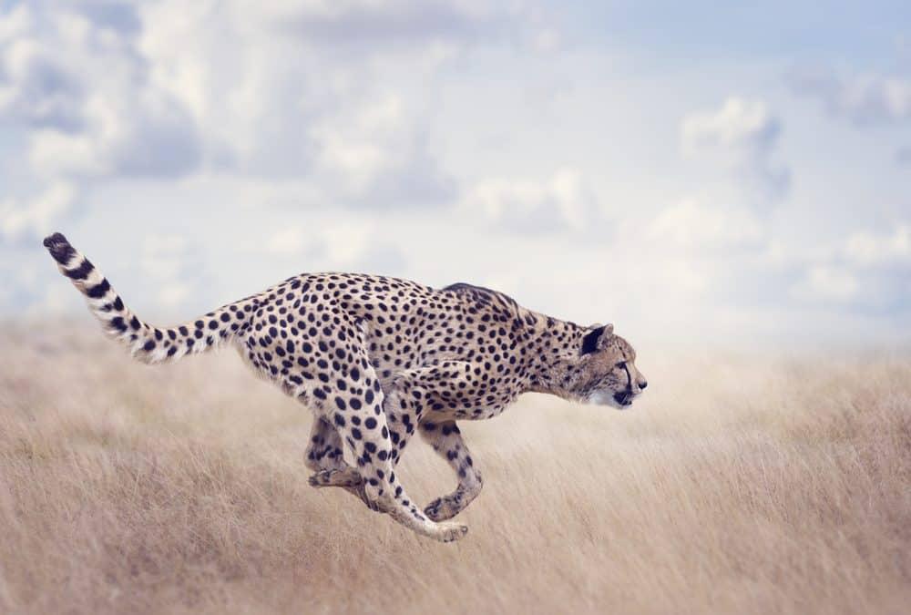 Koja je najbrža životinja